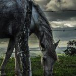 Bolig med hest