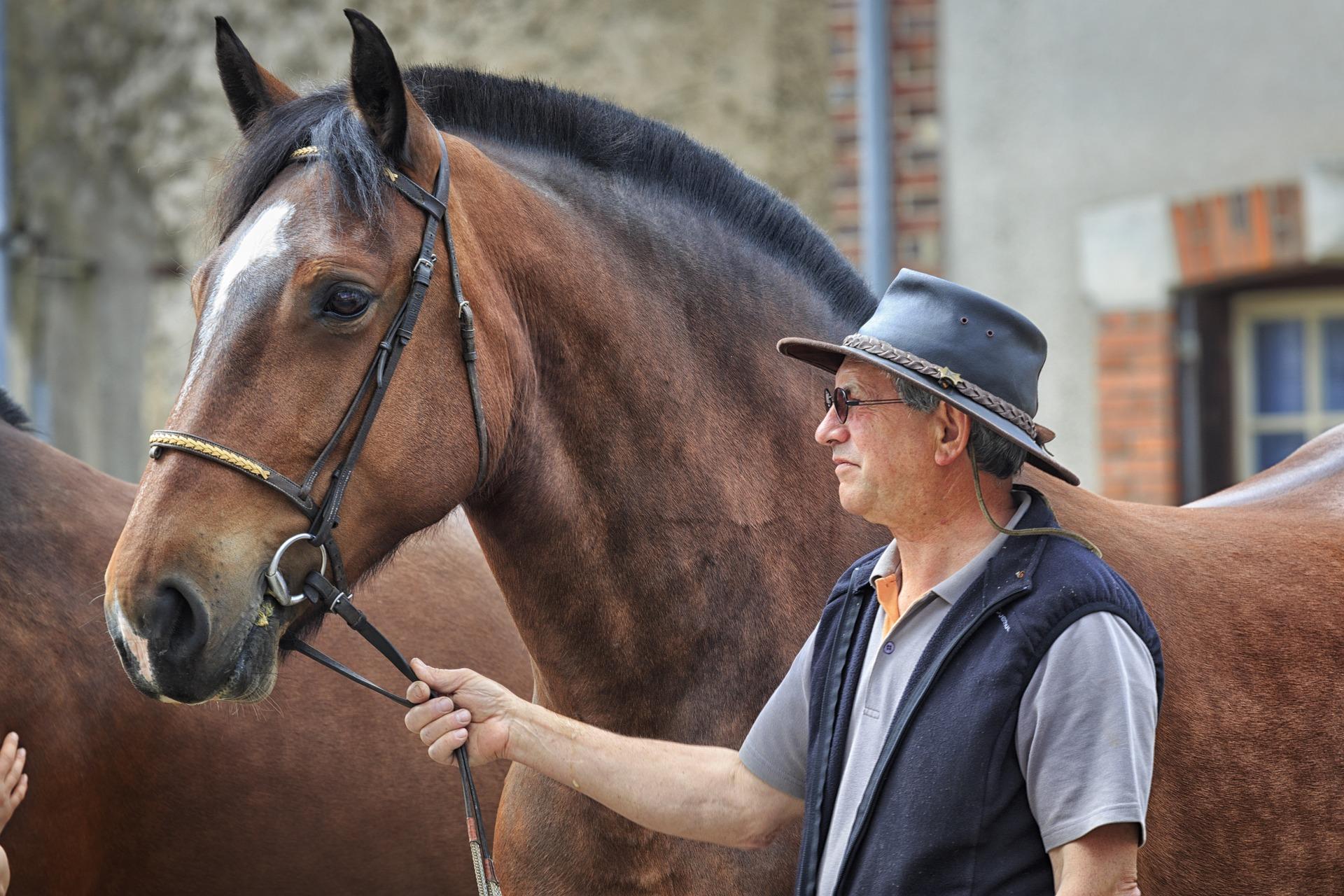 Dyr hest