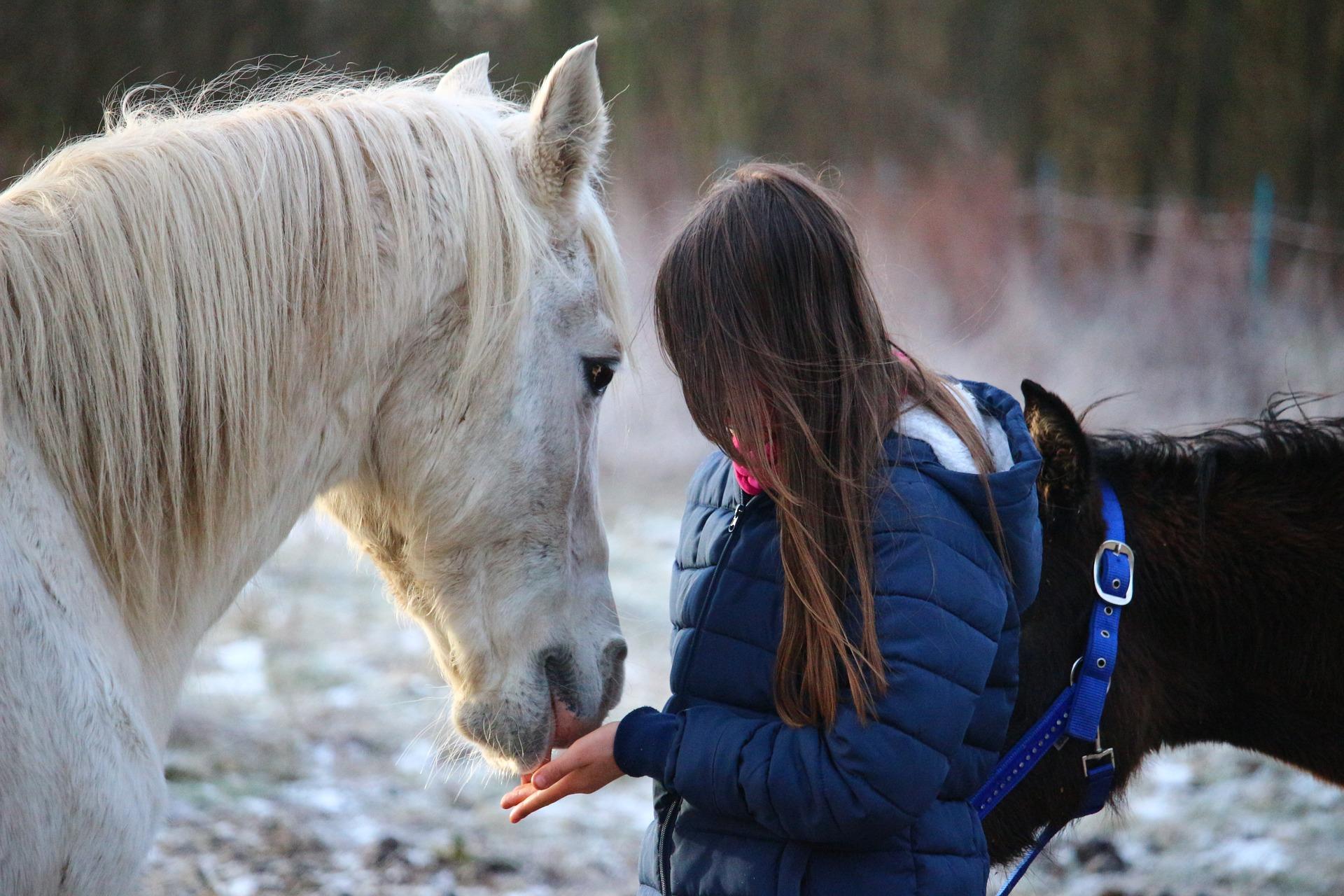 Pige med hest