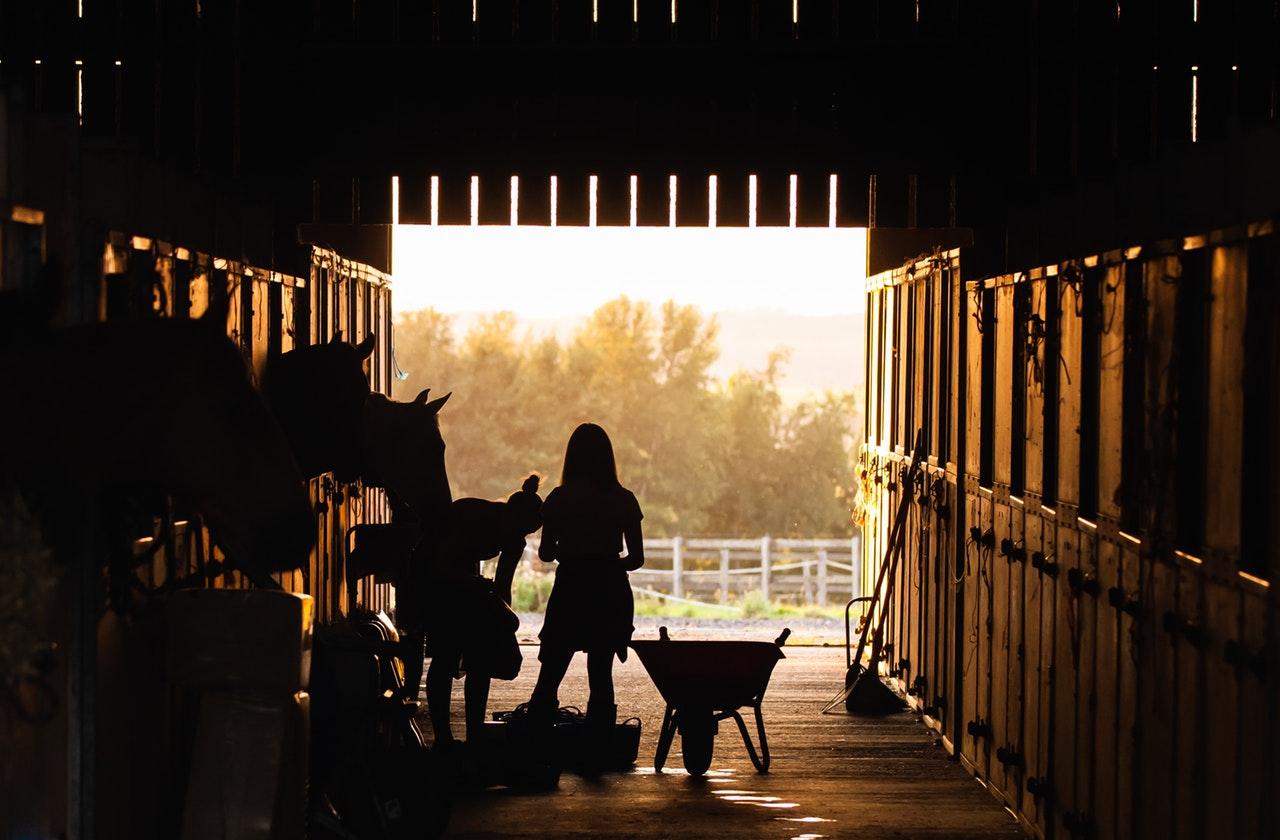 Kvinder fodre heste